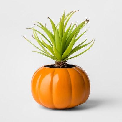 Halloween Pumpkin Succulent Orange