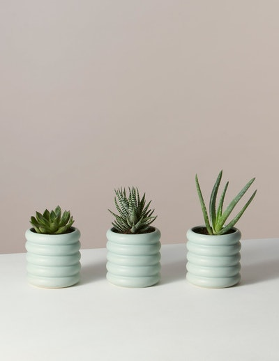 Succulent Trio in Mini Dolores Planter