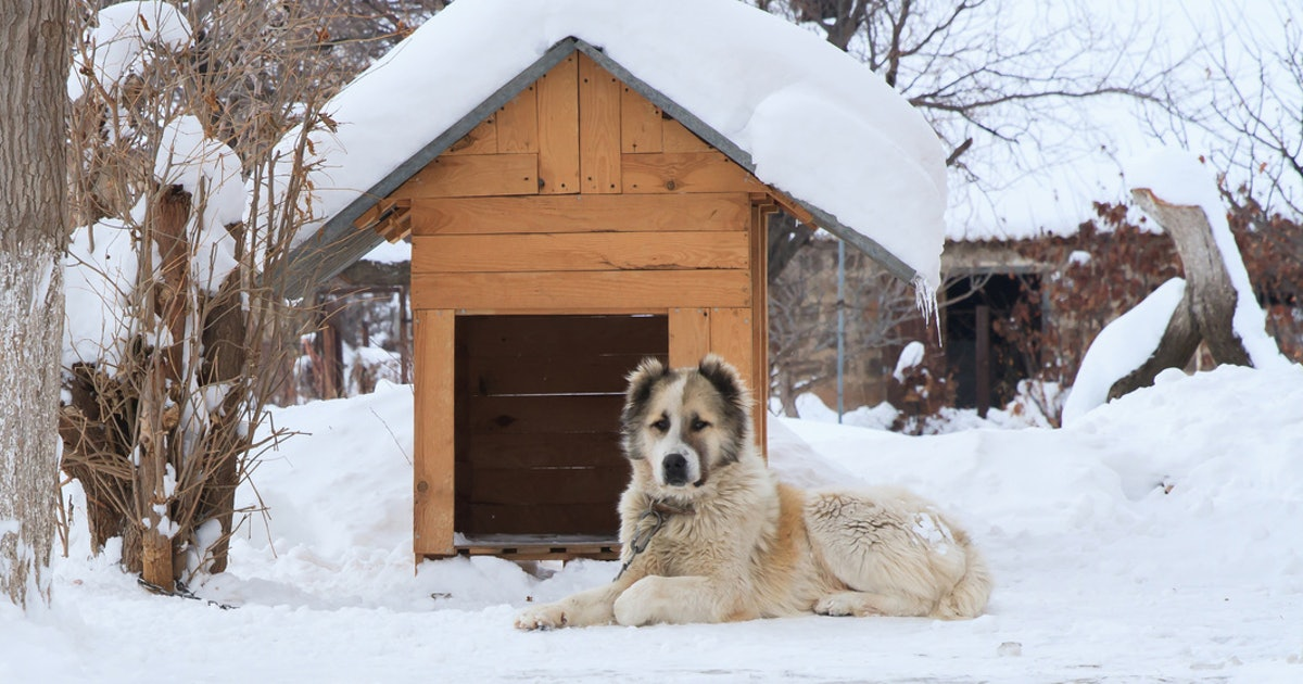 The 3 Best Dog Houses For Cold Weather