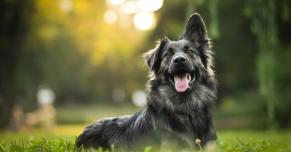 These Are UK's Most Popular Dog Names Of 2019