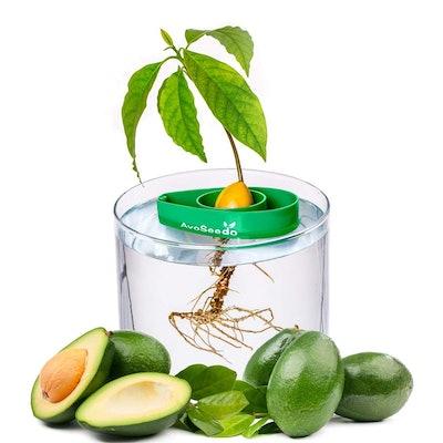 AvoSeedo Avocado Growing Kit