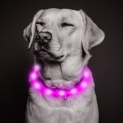 Vizbrite Led Dog Collar