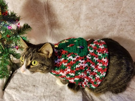 Ugly Christmas Sweater For Cats