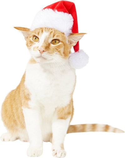 Frisco Holiday Santa Hat Pet Costume