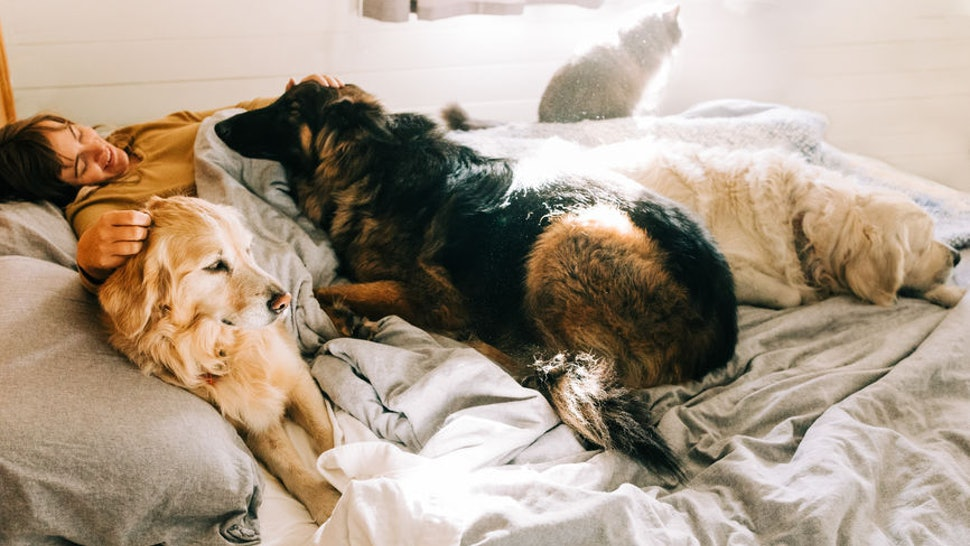 Women Who Co-Sleep With Their Dog Can Improve Their Quality