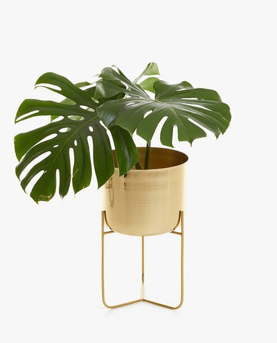 Gold Iron Flowerpot