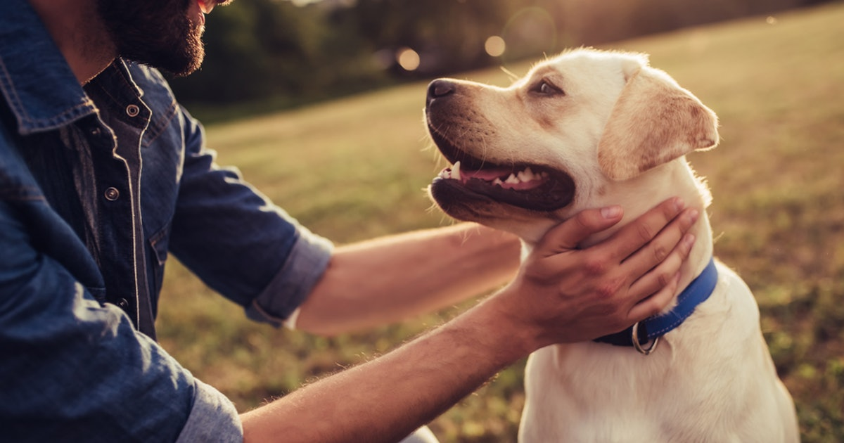 The Best First Pets For You And Your Partner, Based On Your Zodiac Signs