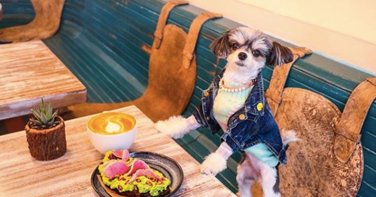 Tinkerbelle The Dog's Owner, Sam Carrell, Is The Genius Behind Her Viral Instagram
