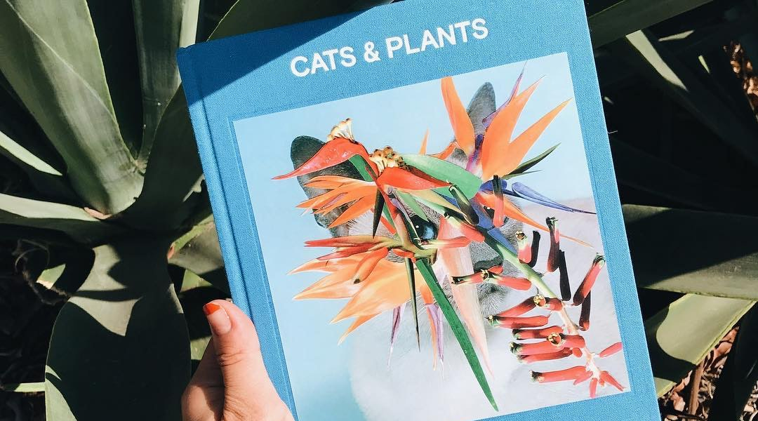 7 Eye Catching Coffee Table Books That Make The Coolest Gifts