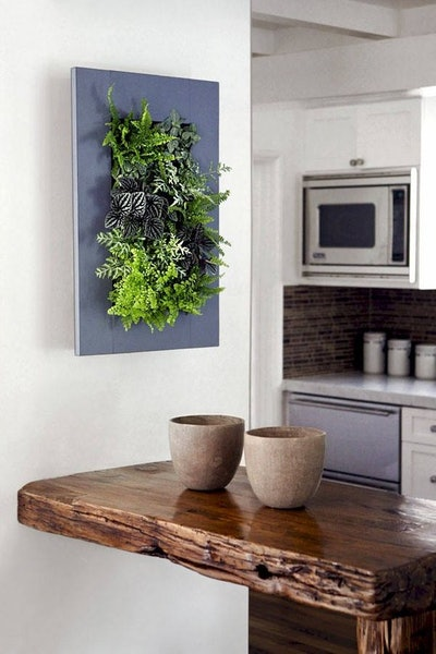 UpthewallCTgardens Living Art Wall Planter with Live Mixed Tropicals