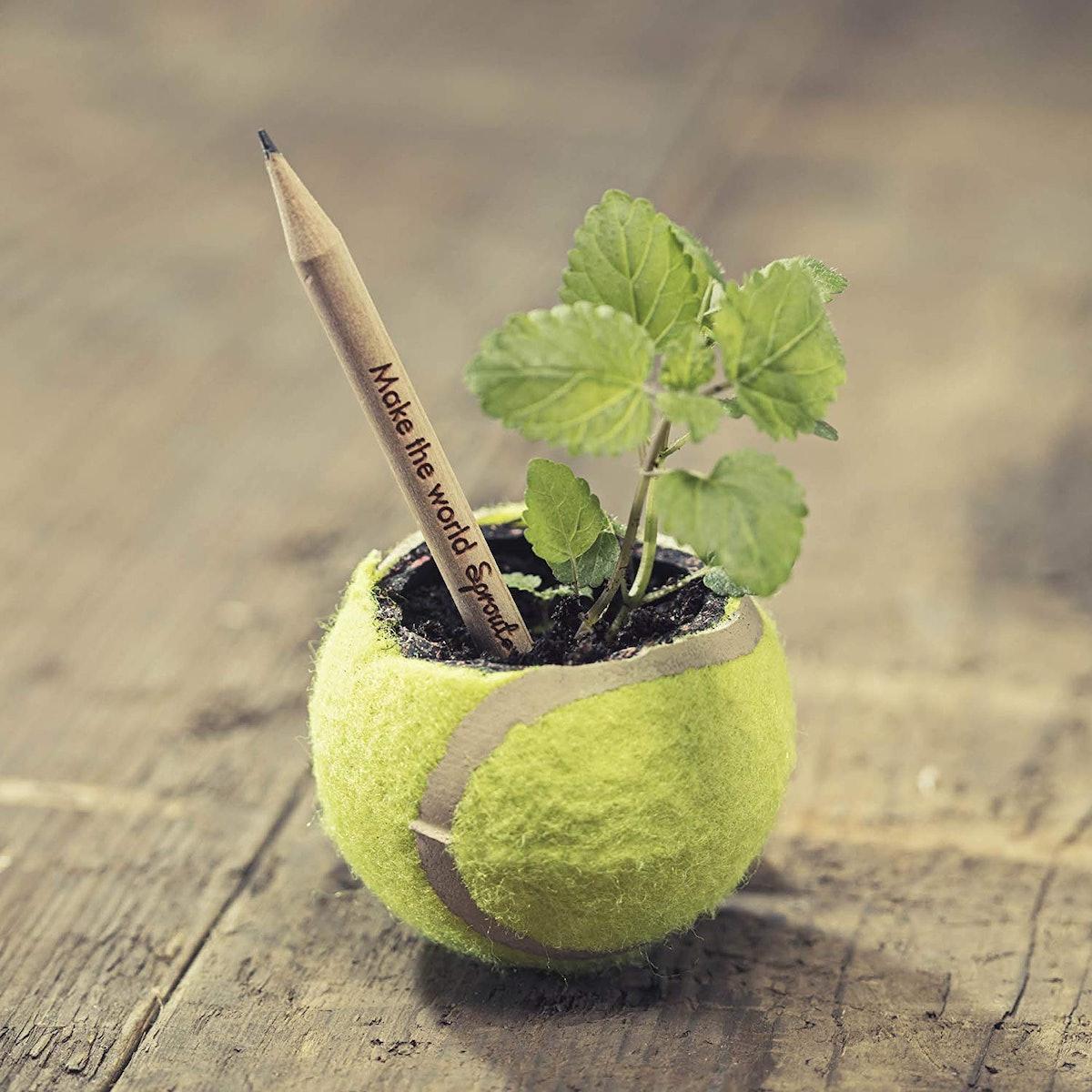 Sprout Plantable Graphite Pencils (5 Pack)