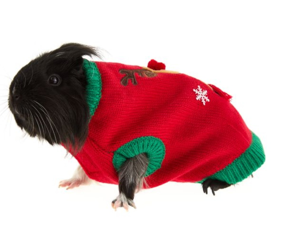 10 Ugly Pet Sweaters For National Ugly Sweater Day Because Why