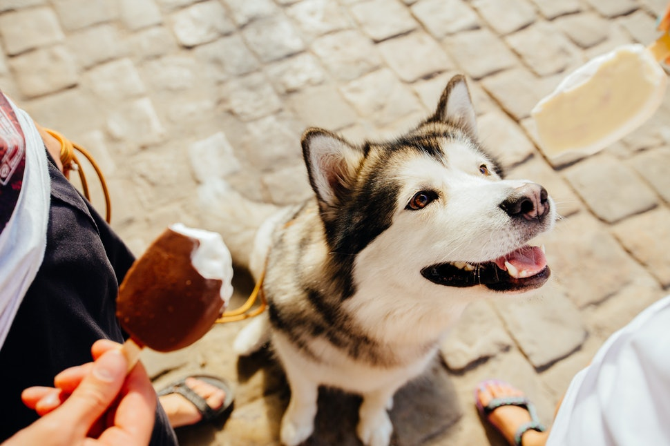 19 Food Names To Give Your Pet