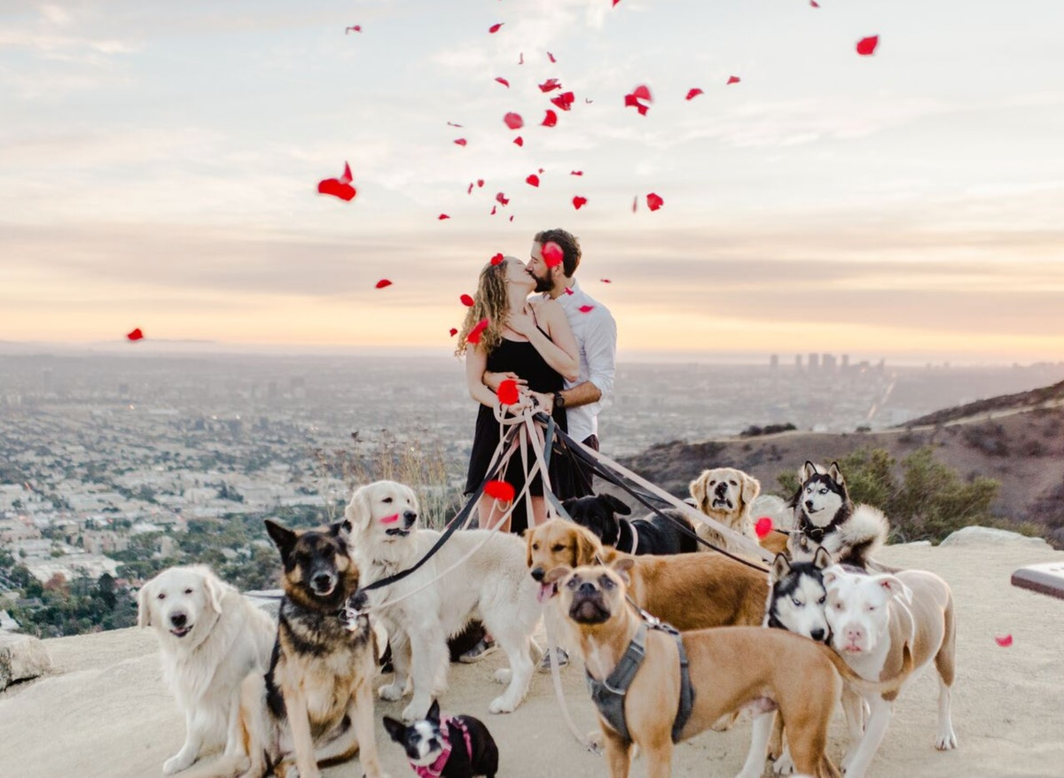 This Guy Proposed With 16 Dogs & A Disney Choir, Setting A New Bar For Engagements