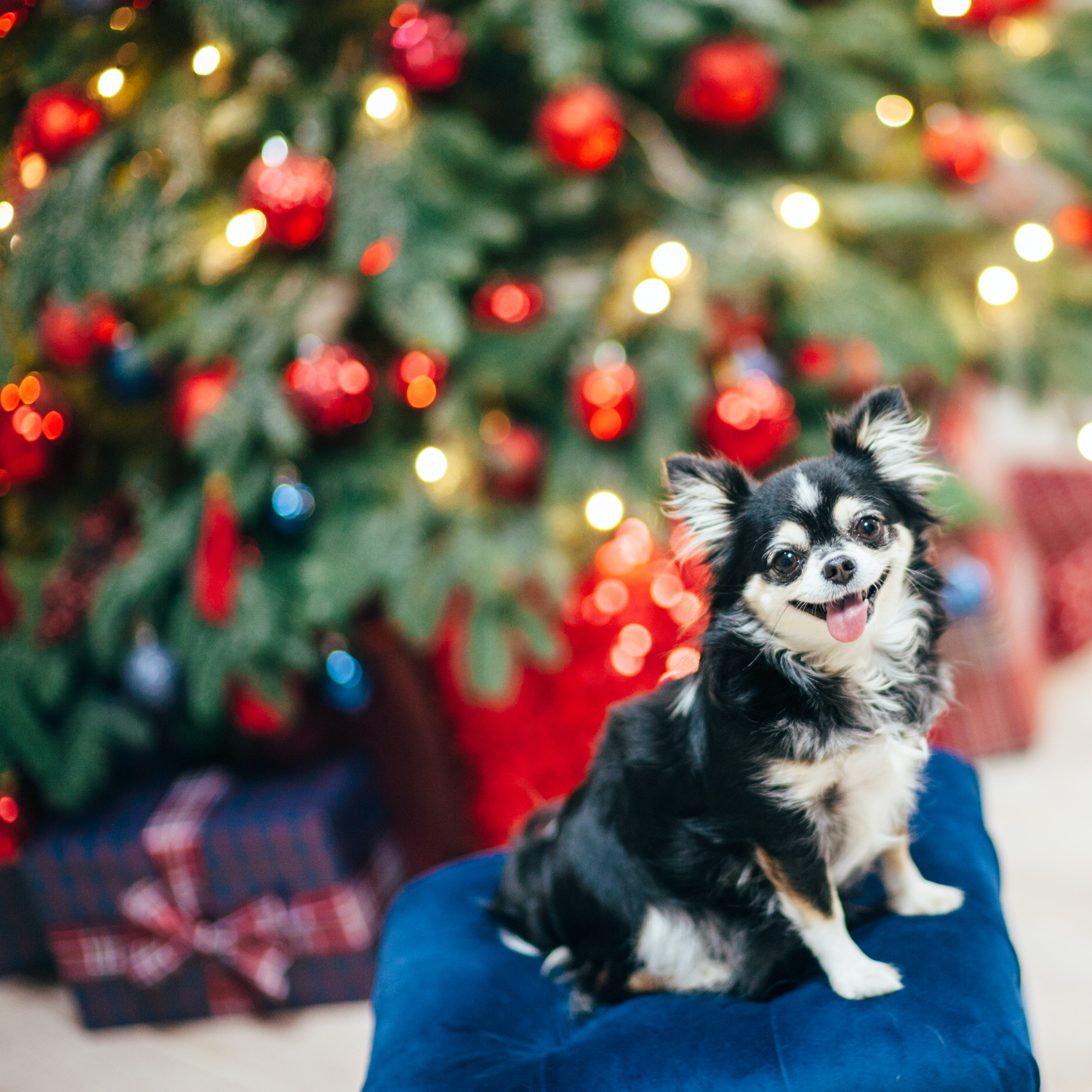8 Pictures Of Dogs Christmas Trees To Wish You A Happy Howlidays