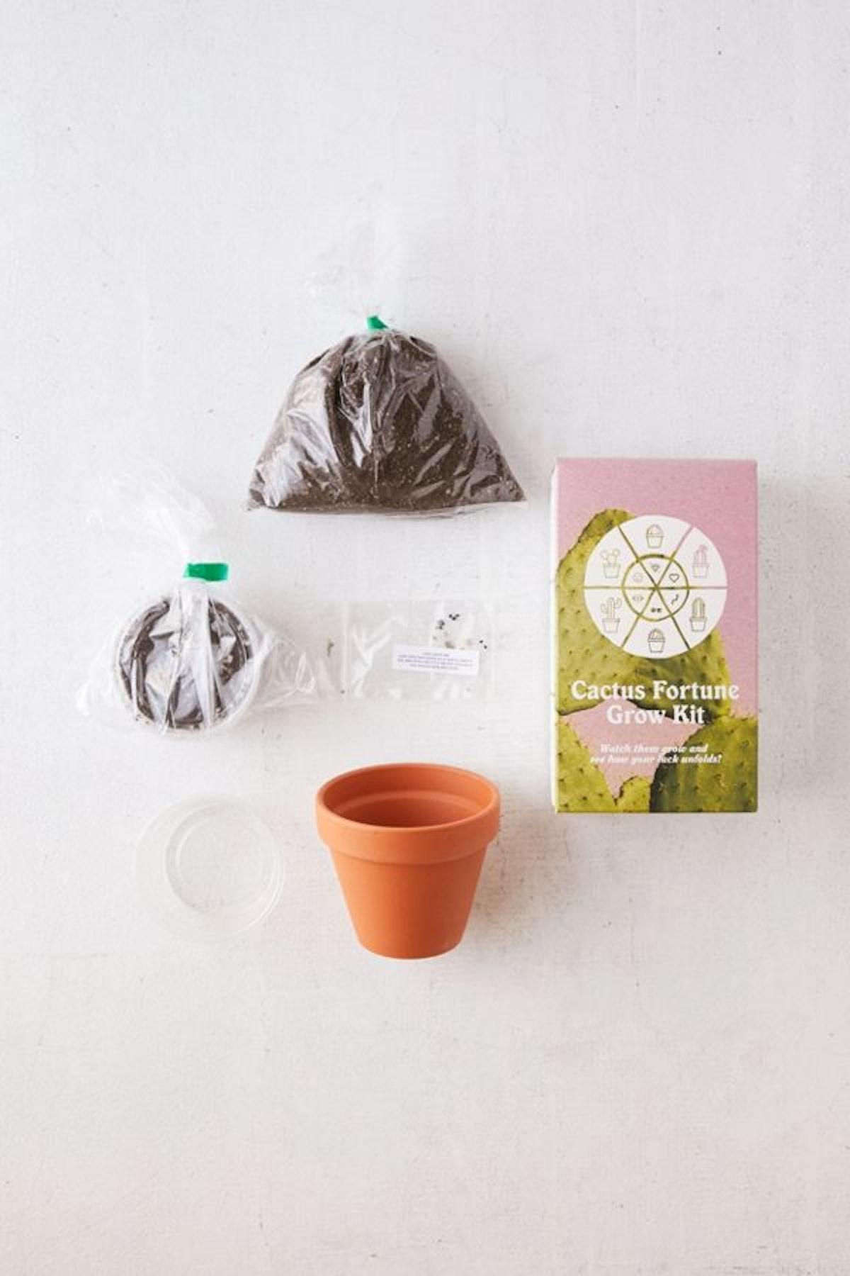 Cactus Grow Kit