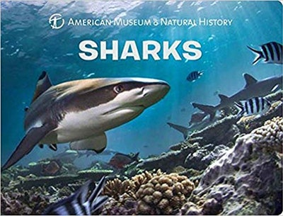 Shark Science For Toddlers