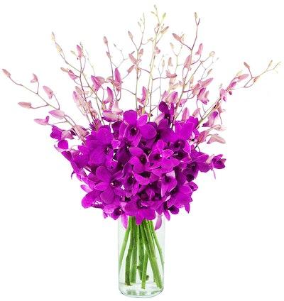 Blooms2Door Orchids