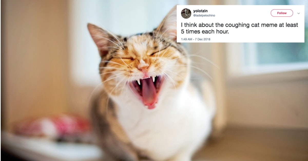 These Tweets About The Coughing Cat Meme Show That It Is ...