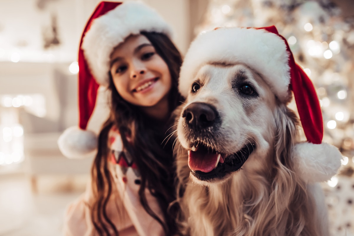 11 Holiday Gifts Your Dog Totally Deserves, Whether They've Been Naughty Or Nice