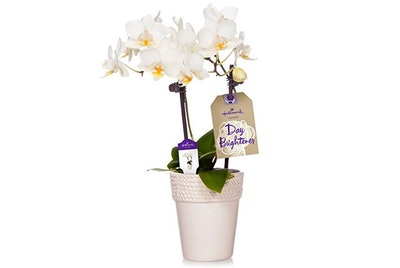 Hallmark Petite White Orchid