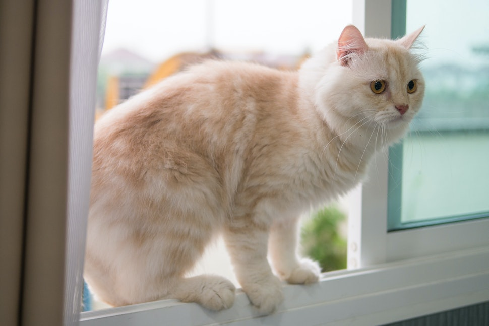 ini-alasan-kenapa-kucing-takut-timun-bahaya-gan