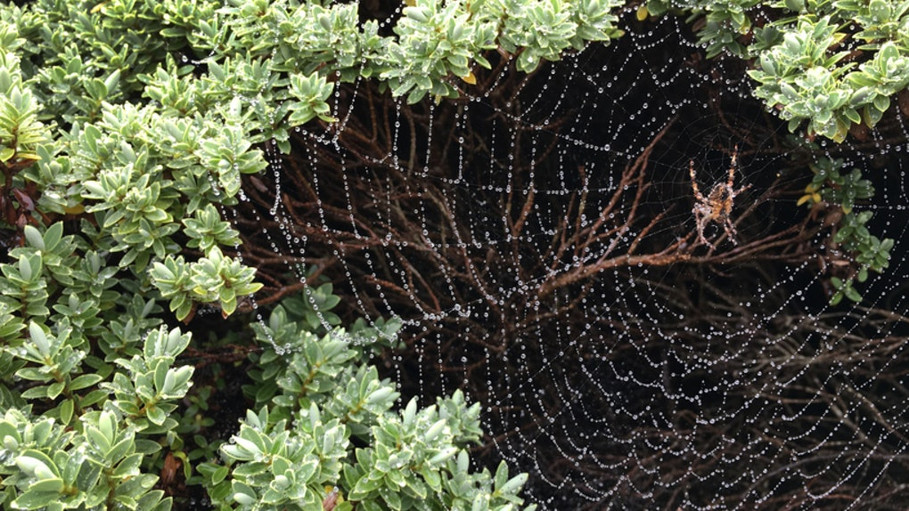 What Do Dreams About Spiders Mean? These Interpretations Are
