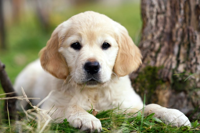 13 Dog Breeds That Can Help With Anxiety