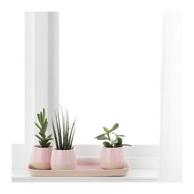 KÖRSBÄR Saucer & Succulent With Pot