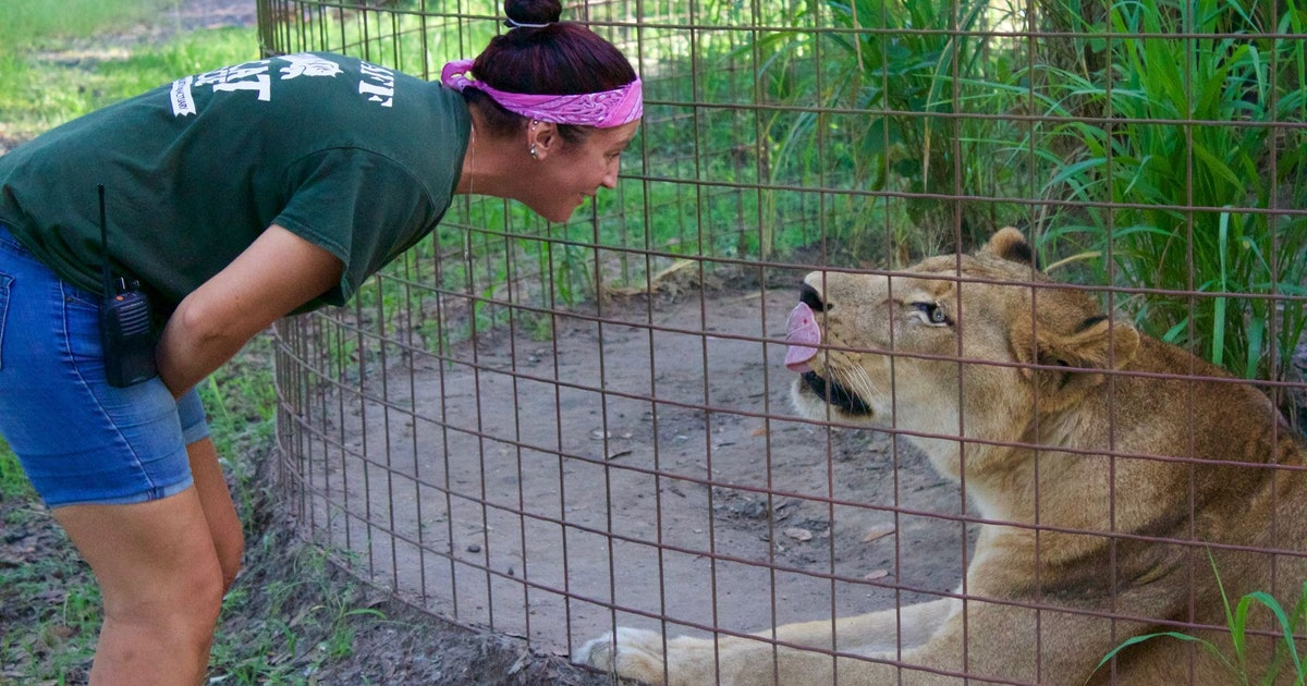 Big Cat Rescue's Videos Are Made By A Caring Woman Living Out Her Dream Life
