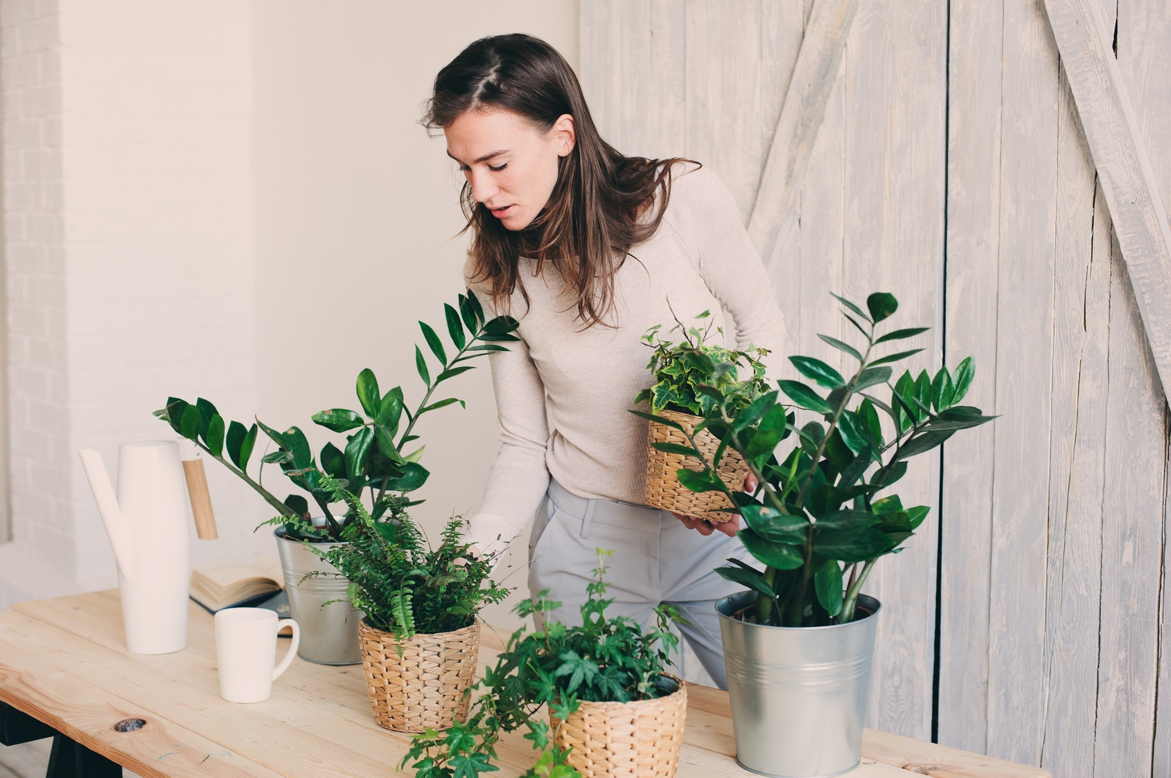 7 House Plants For Allergies That Can Help Clear The Air