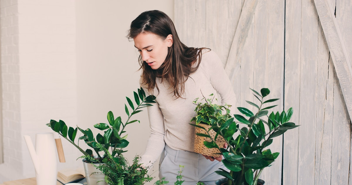 7 House Plants For Allergies That Can Help Clear The Air Around You