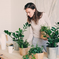 A woman prunes her house plants for allergies