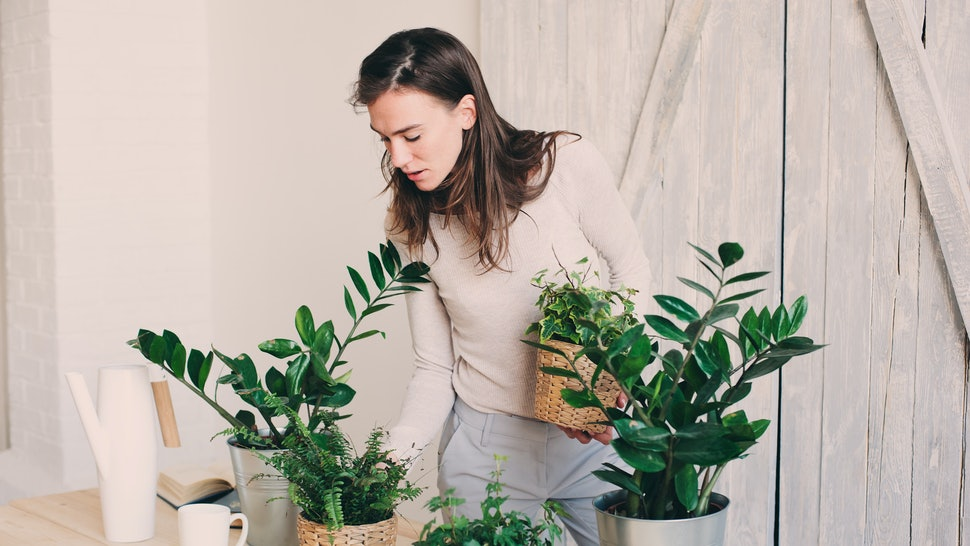 7 House Plants For Allergies That Can Help Clear The Air ... on non toxic house plants, allergy house plants, long lasting house plants, durable house plants,
