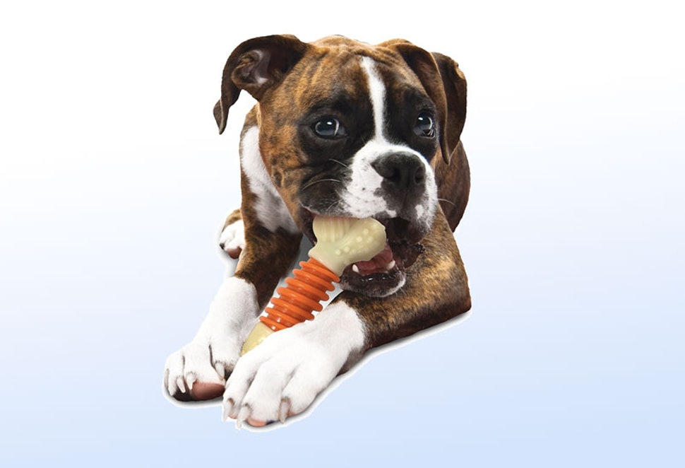 The 7 Best Toys For Big Dogs
