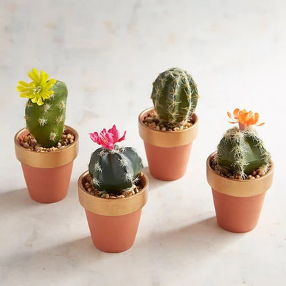 It's all the fun of a real cactus without the need for water, sunlight, or risk of pricking your fingers. Sets come with four assorted faux cacti, perfect for places that don't allow live plants.