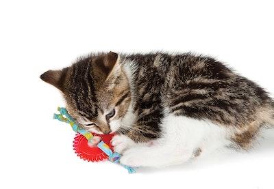 Petstages Dental Kitty Chew Wheel