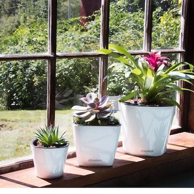 Window Garden Aquaphoric Self-Watering Planter