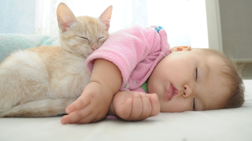 5 Old Wives' Tales About Cats & Babies Parents Can Ignore