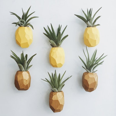 Pineapple Air Plant Magnet