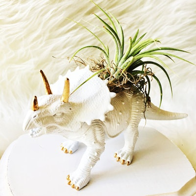 White Triceratops Gold Accents Dinosaur Planter