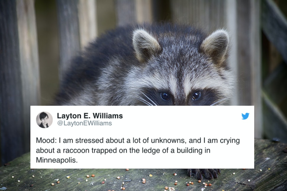 Image Result For Mpr Raccoon
