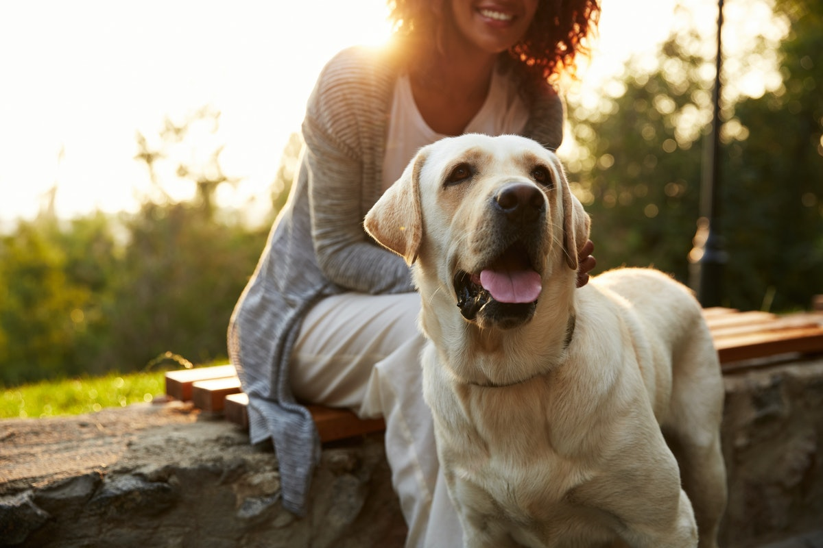 10 Signs Your Dog Loves You & Isn't Just Pretending Because You're The One With The Treats