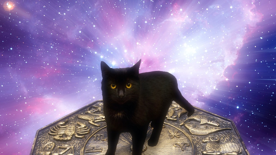 Image result for kitty zodiac