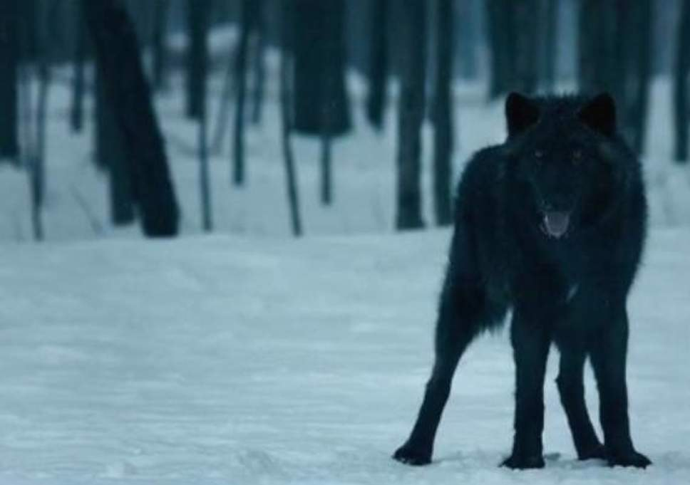 That Wolf In The Handmaids Tale May Hold More Significance Than
