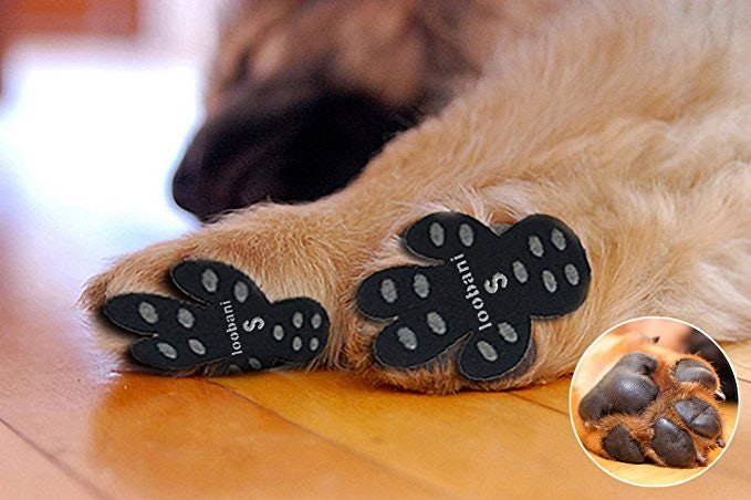 The 6 Best Dog Socks For Hardwood Floors