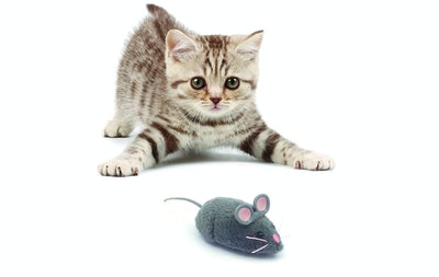 HEXBUG Mouse Cat Toy