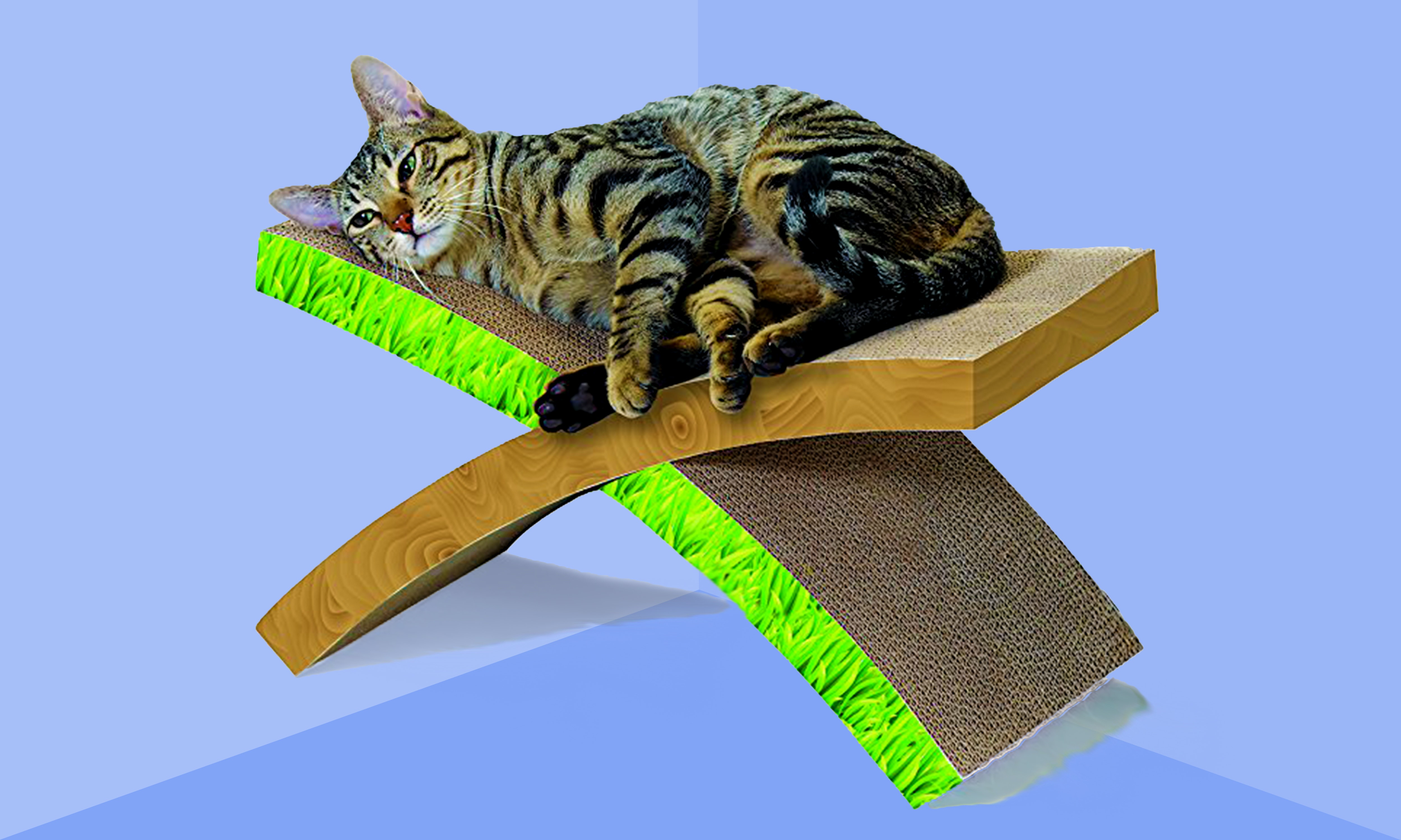 8 Cat Toys For Lazy Cats