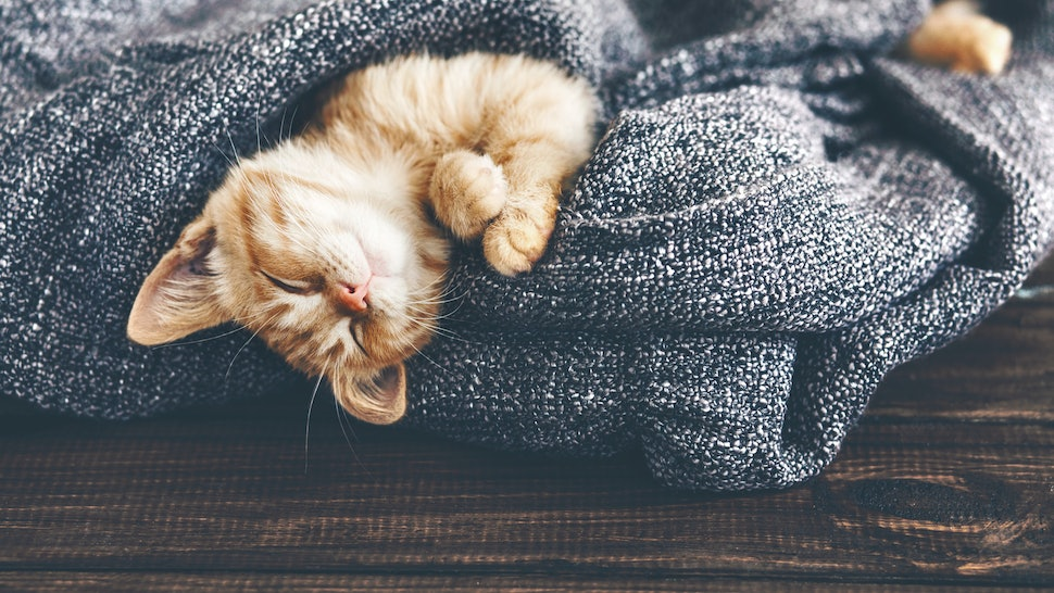 How To Get Rid of Cat Fleas Safely, Because It's Not As Simple As