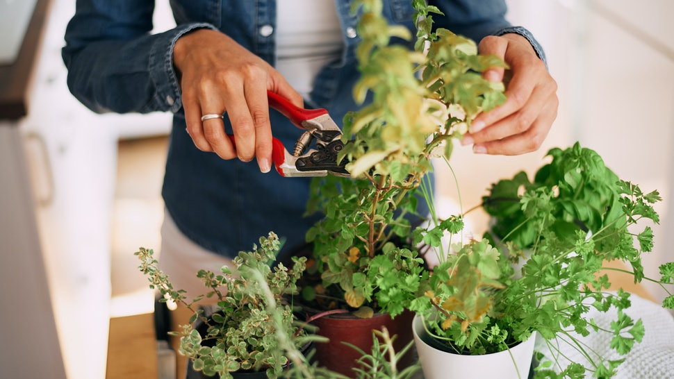 9 Houseplants That Can Help Repel Bugs